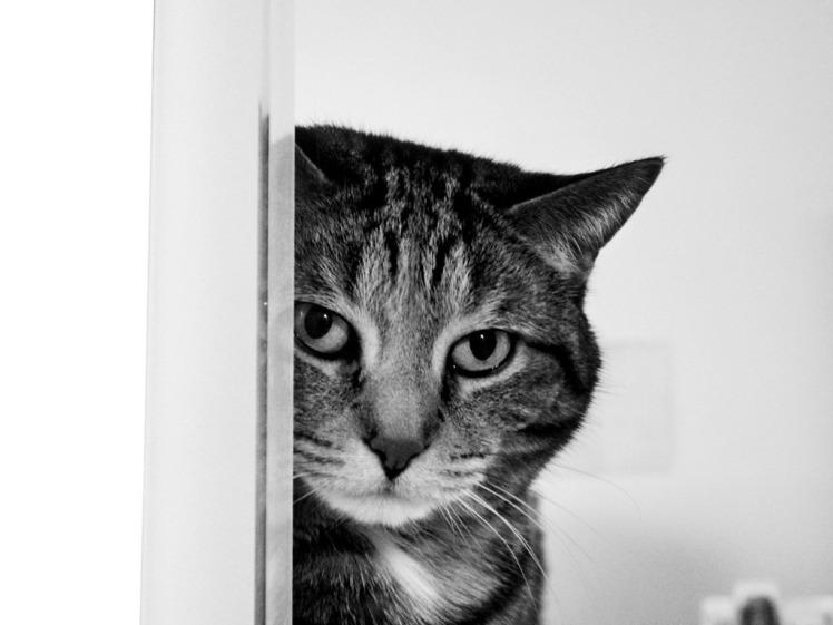 Curiosity_killed_the_Cat_Wallpaper_03p0b